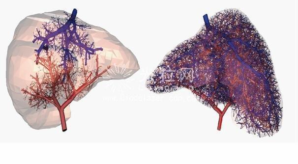科学家用3D打印成功培育人体血管系统