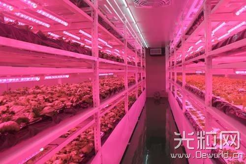 习大大参观植物工厂,中国LED植物照明要爆发?