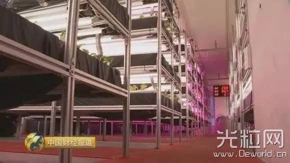 央视揭秘智能LED植物工厂技术发展