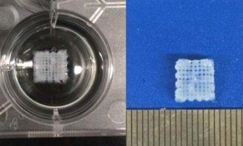 微型生物3D打印支架,可以再生受损的周围神经