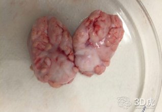 Celprogen Inc.宣布成功使用脑干细胞3D打印人脑细胞